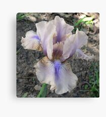 "Median Iris - ""Shameless"" Canvas Print"