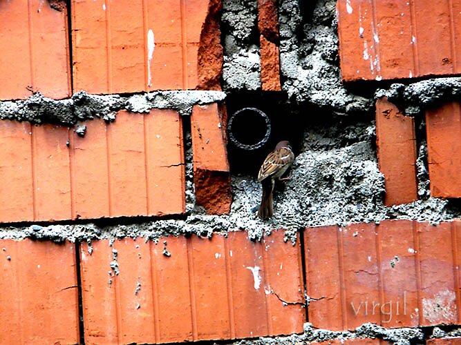 home brick home by virgiloi