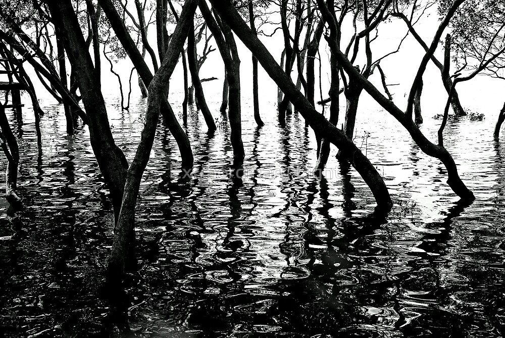 Mangrove Shadows by Extraordinary Light