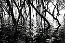 Mangrove Shadows by Renee Hubbard Fine Art Photography