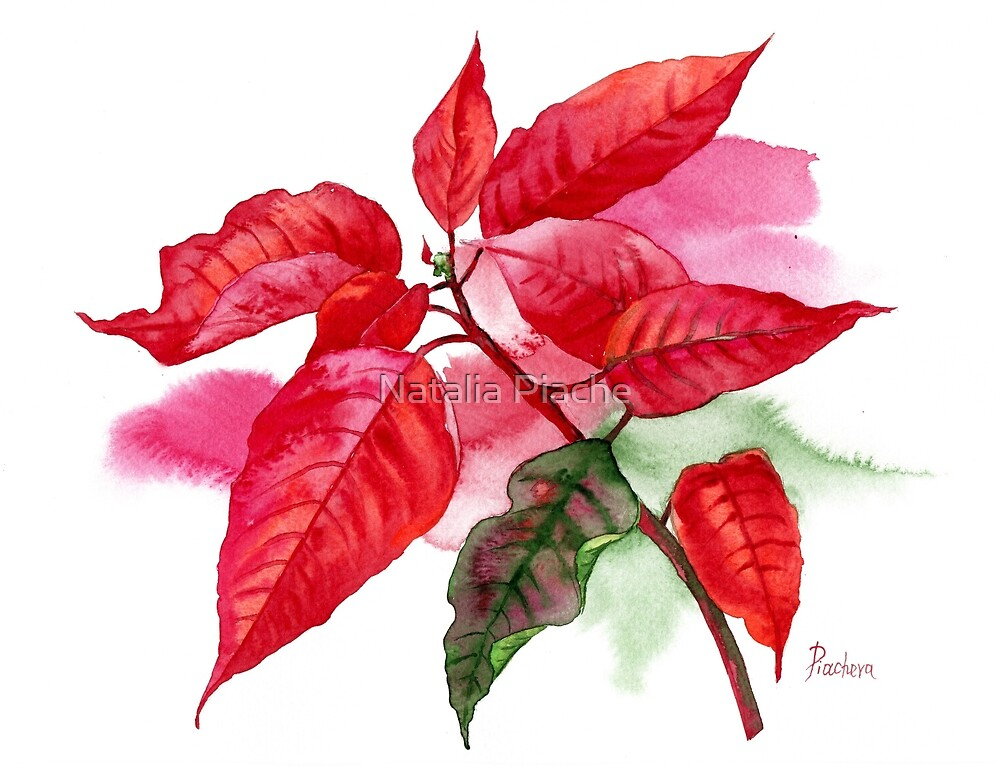 Red Poinsettia with Green Leaf by Natalia Piache