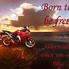 Born to be Free by Julia Harwood