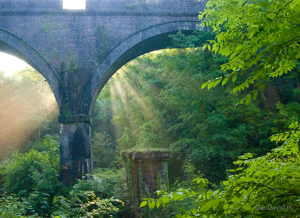 Sunbeams at Plymbridge Woods by DonDavisUK