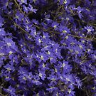 Australian Wild Flowers #6  by Paul Gilbert