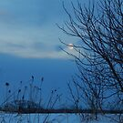 Snow Moon by WildThingPhotos