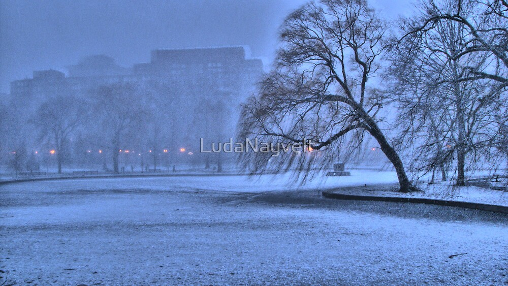 Winter  Blue by LudaNayvelt
