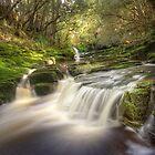 Highland cascades, Tasmania by Kevin McGennan