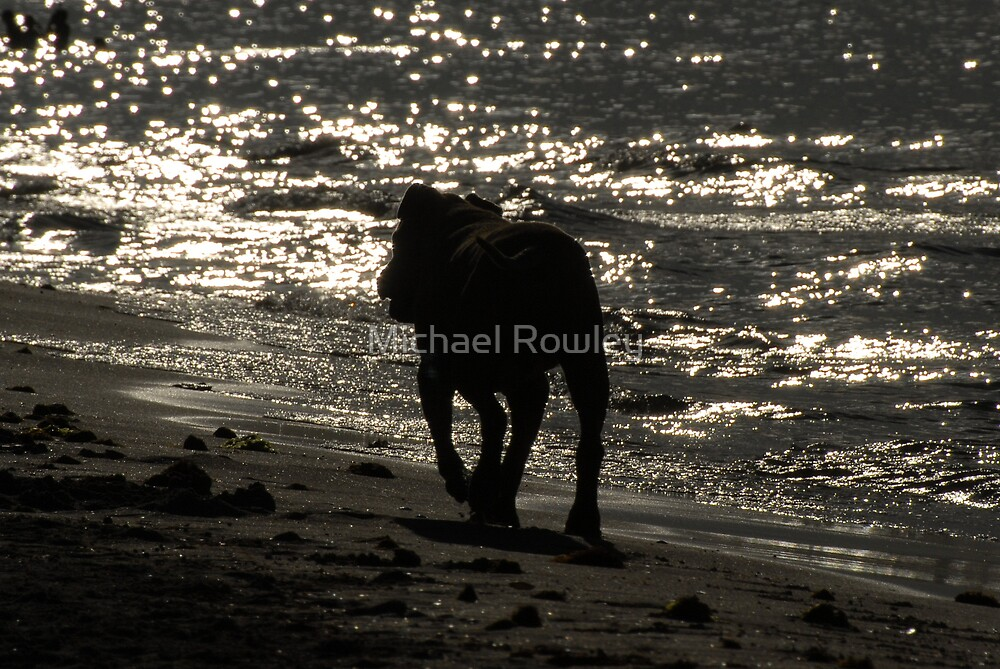 Going Home by Michael Rowley