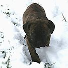 Puppy in the Snow by natnvinmom