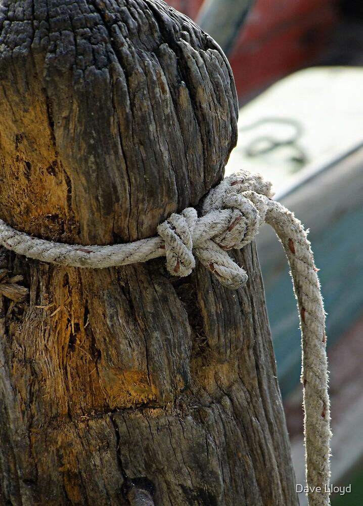 Gone Knotty 11 by Dave Lloyd