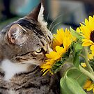 Stop And Smell The Flowers by Lynda Anne Williams