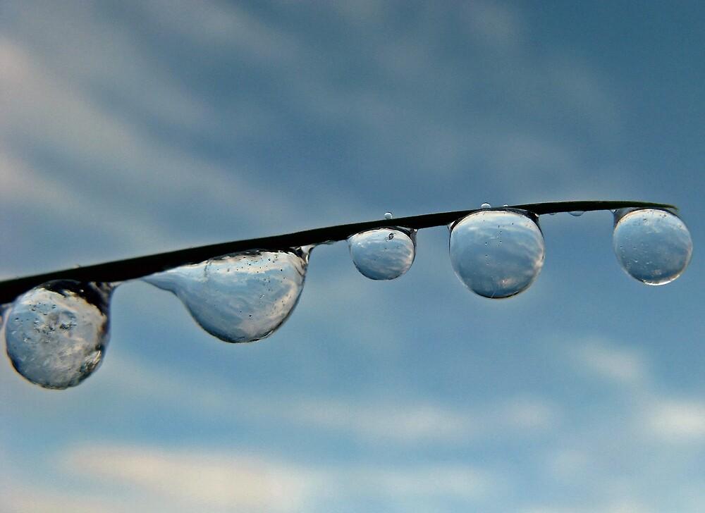 Ice Drops by Corey Bigler
