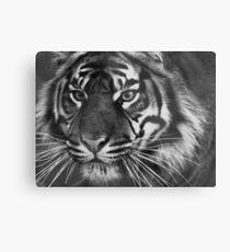 Sumantran Tiger Metal Print