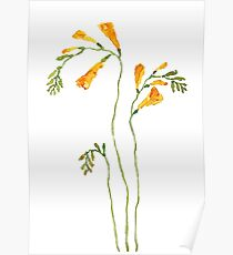 yellow freesia flower watercolor Poster