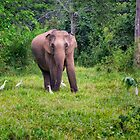 Elephant in the Wild - Thailand by Kathy Weaver