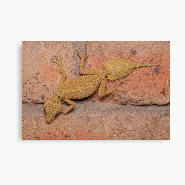 Southern Leaf-tailed Gecko Canvas Print