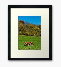Brown rufous carroty cows on green grass pasturage Framed Print