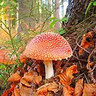 Toadstools !! by Eugenio