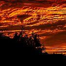 Flaming Sky by Belinda Osgood