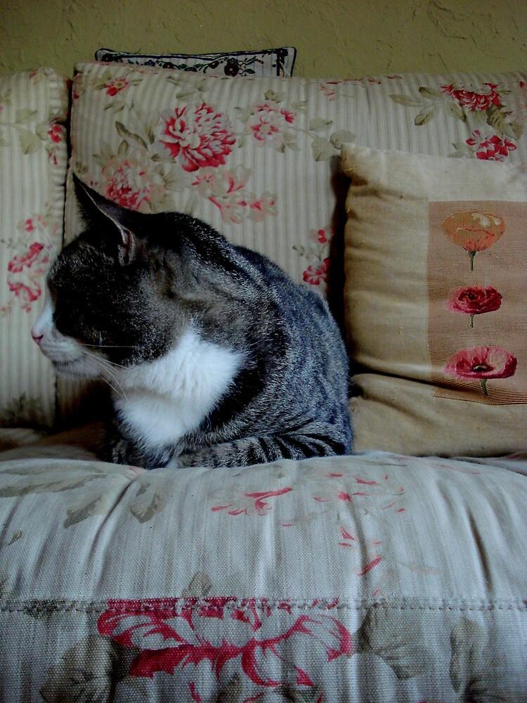 # Cat. by MelanieChrissy