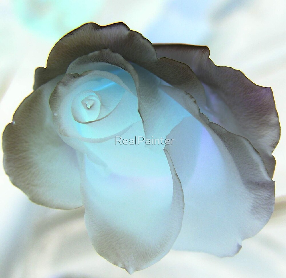 Bluelighted Rose Glow by RealPainter