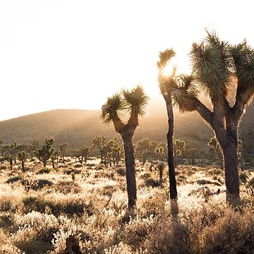 Joshua Tree Park by evStyle