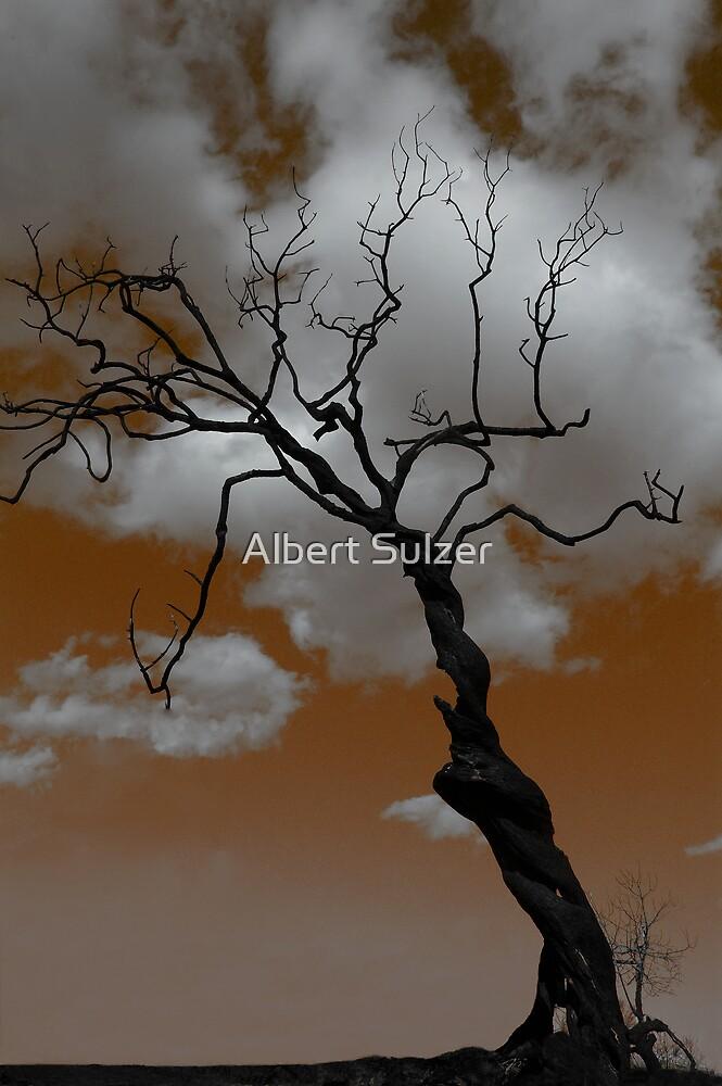 Dead Tree 02 by Albert Sulzer