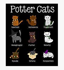 Harry Pawter Cute Kitten Potter Cats Photographic Print