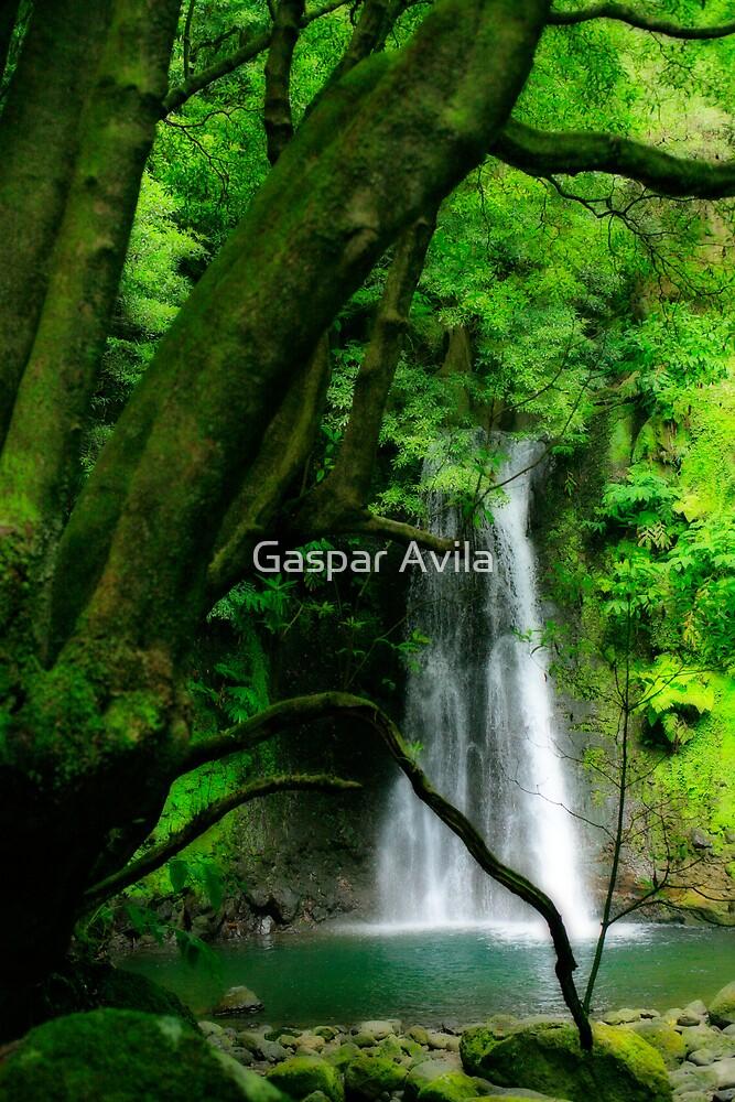 Waterfall, Azores islands by Gaspar Avila