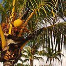 Coconut by Eliza1Anna