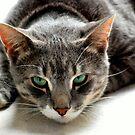 Musa Cat by K.D. Hemi