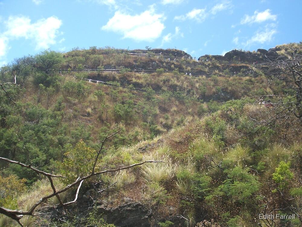 Trek Up Diamond Head Trail by Edith Farrell