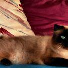 Rocky, my best friend by photorolandi
