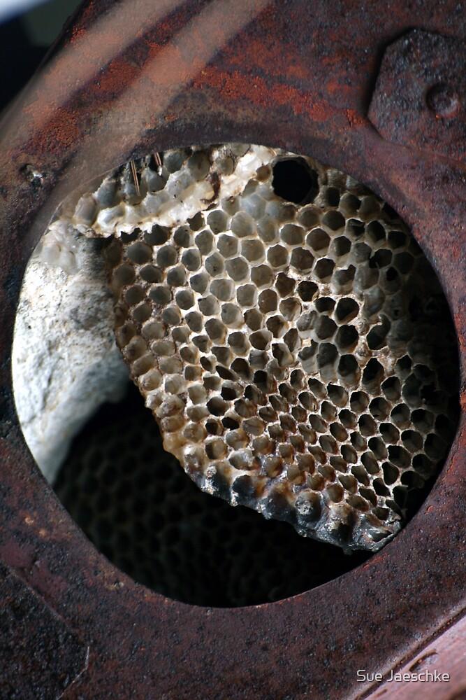 Bee Gone by Sue Jaeschke