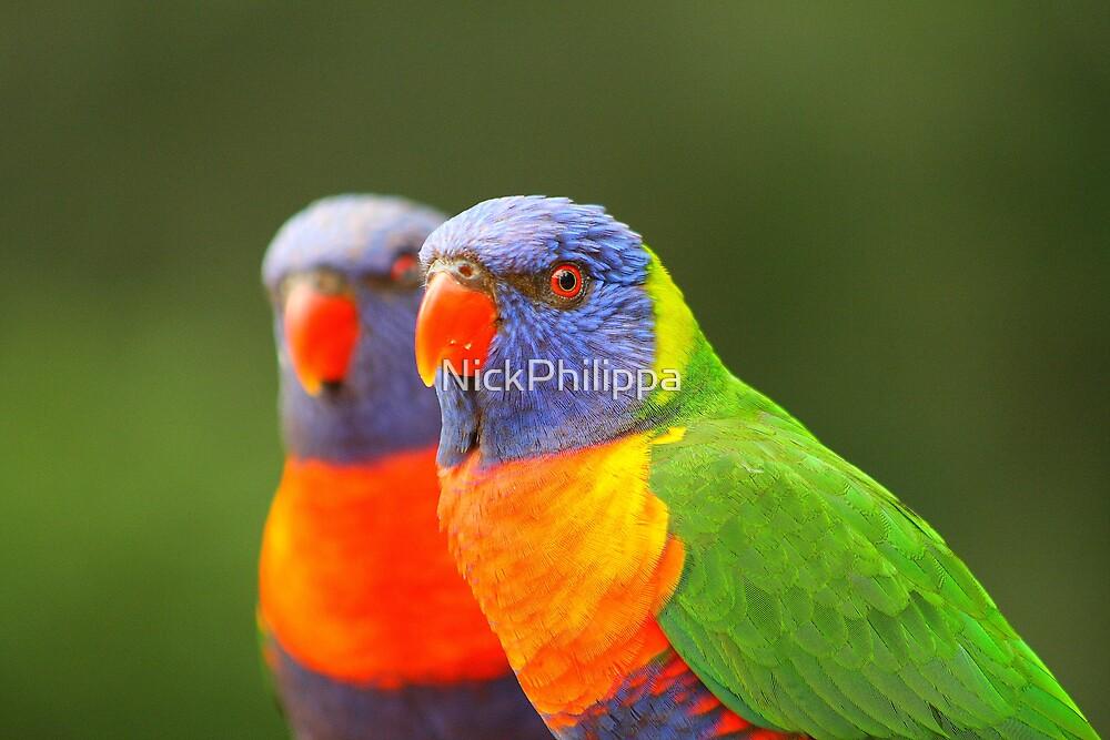 Rainbow Lorikeet by NickPhilippa