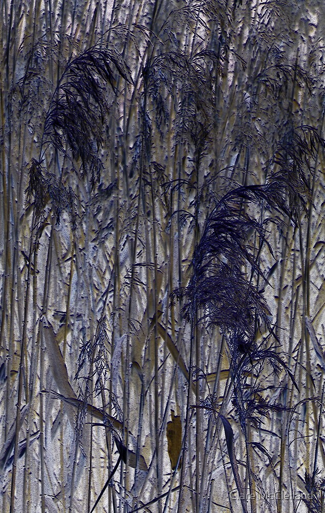 Pampas Grass by Clare McClelland