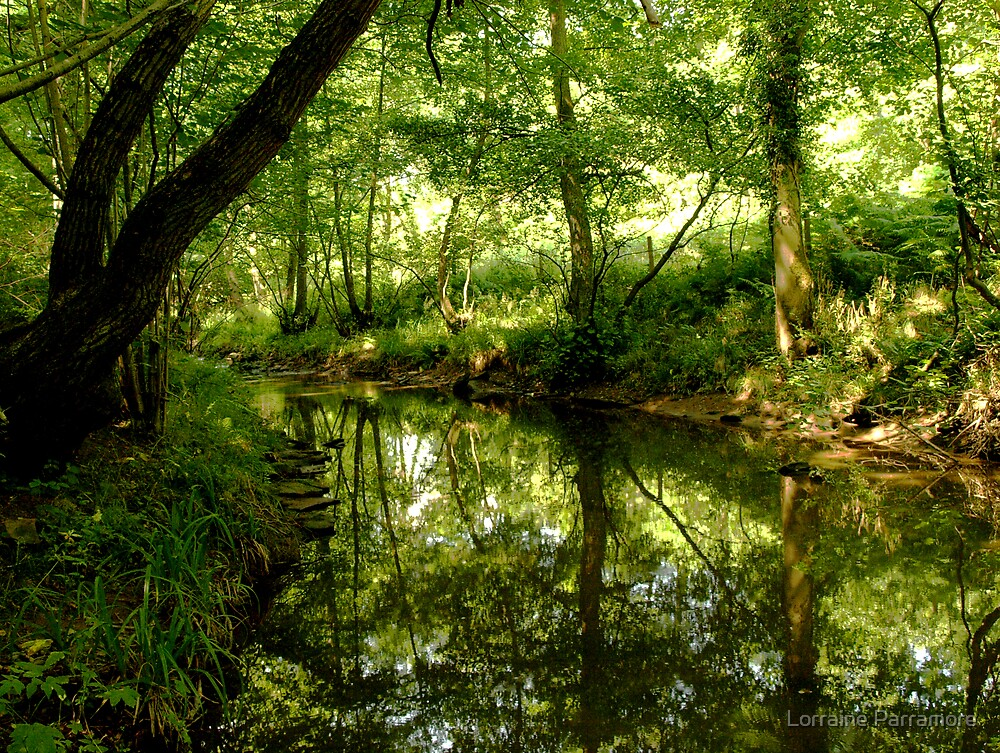 Woodland reflections by Lorraine Parramore