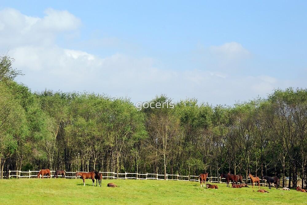 Herd of horses in corral by goceris