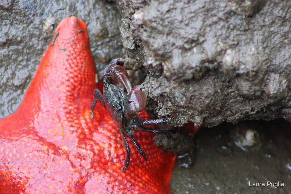 Starfish & Crab by Laura Puglia