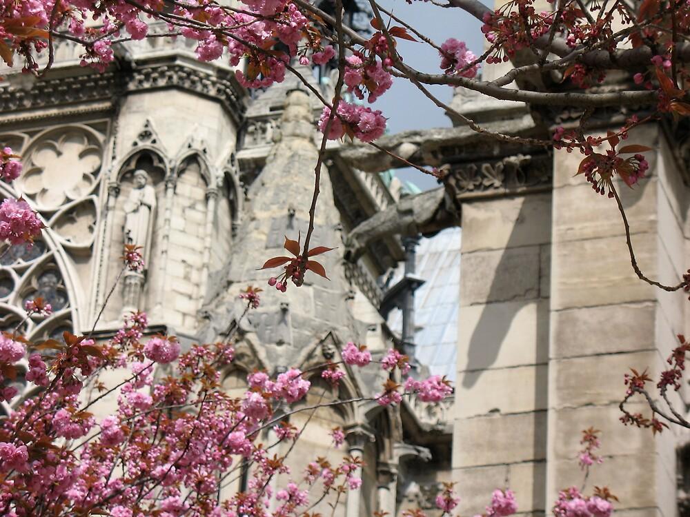 notre dame in bloom by petalpress