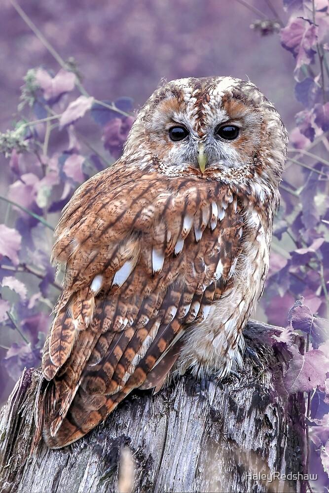 Purple owl by HaleyRedshaw