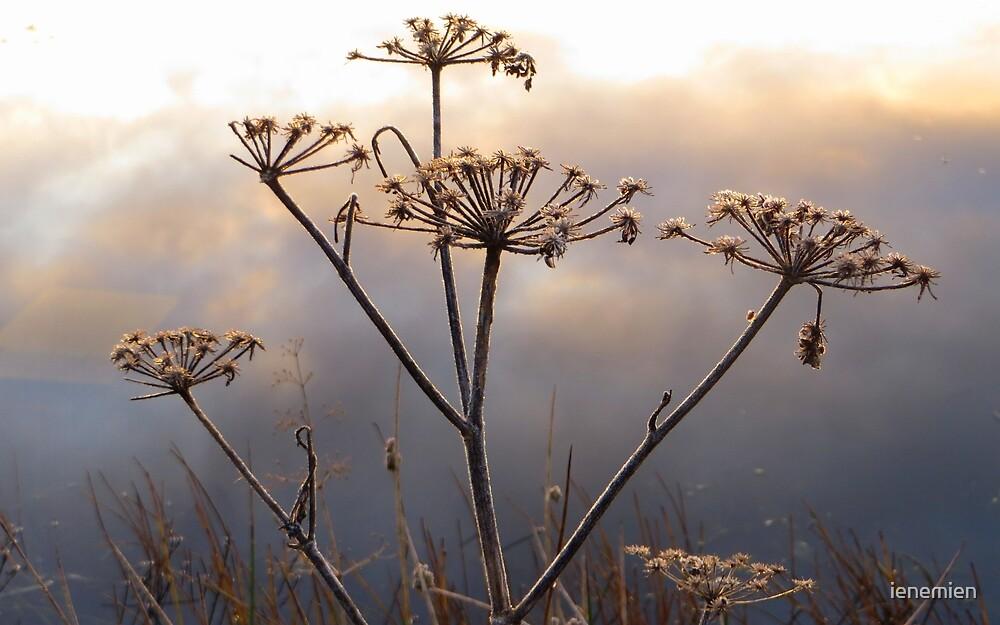 Flowers at Sunrise by ienemien