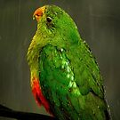 Parrot against the storm by theleastone