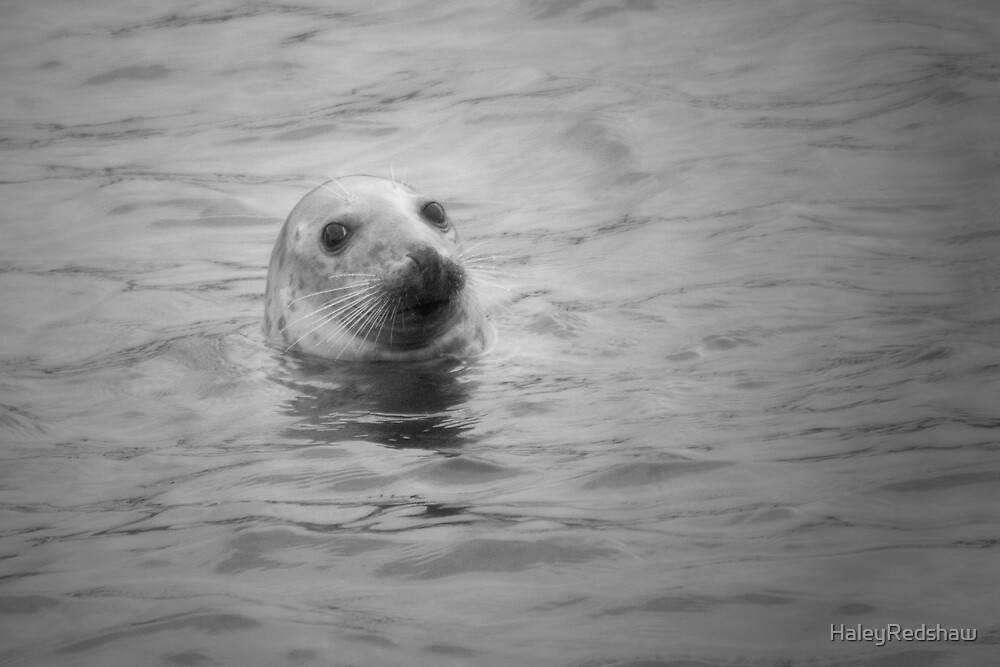 seal in the sea by HaleyRedshaw