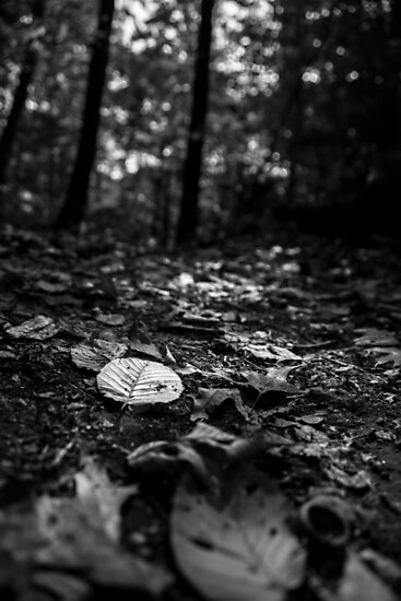 Leaf Ground by mag0215