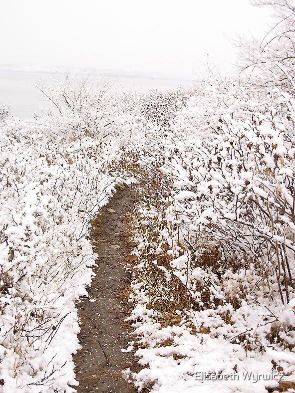 Trail by Elisabeth Wyrwicz