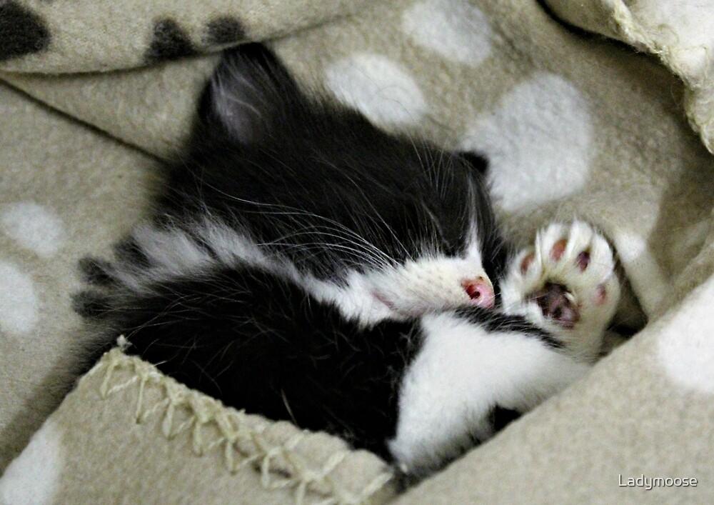 Sleepy Headzzz by Ladymoose