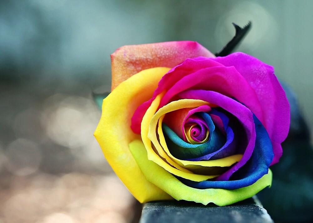 Rainbow Rose by Crea8tive1