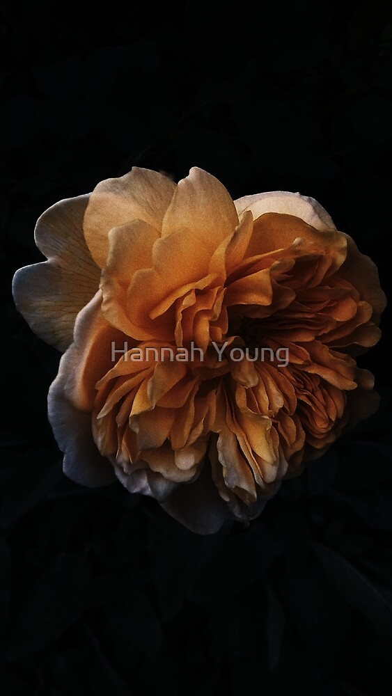 veins by Hannah Young