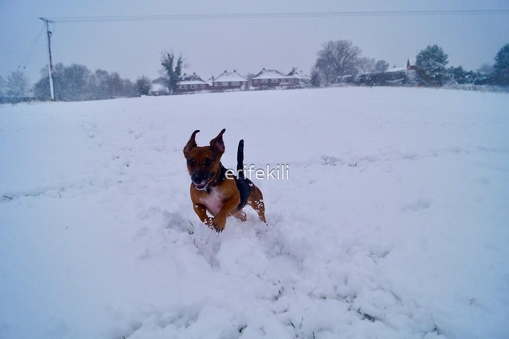 Daschund in the snow by erifekili